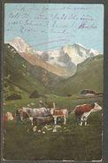 Carte P De 1908 ( Berne / Les Vaches ) - BE Berne