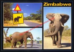 Elephant Crossing - Zimbabwe - Éléphants