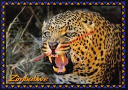Leopard - Zimbabwe - Zimbabwe