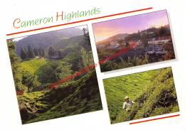 Boh Tea Estate In The Early Morning - Tanah Rata Town At Dusk - Cameron Highlands - Malaysia - Malaysia