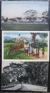 Trinadad Lot 5 Cpa  Antilles - Trinidad