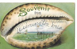 COQUILLAGE (grain De Café ) Carte Gaufrée  SOUVENIR FROM WILMINGTON (Dela) To WEISSPORT (PA) 1908 N° 364 - Wilmington