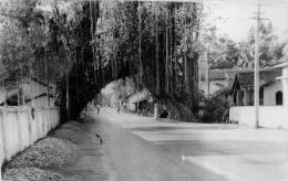 ROAD TROUGH BANYAN TREE KALUTARA - Sri Lanka (Ceylon)