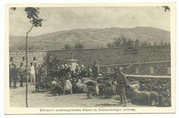 1. Weltkrieg Erbeutete Montenegrinische Schafe Im Defensionslager Avtovac Photo-AK 1915 - Guerre 1914-18