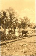 Afrique /////  CPA - Cultiveurs - Postcards