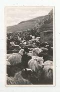 Cp, ILES FEROE , SEYDUR A Raett , Vierge , Moutons , élevage , Agriculture - Féroé (Iles)