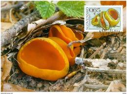 337-338 SLOVAKIA-Pilze-Mushrooms-Champignons-Funghi-Hongos, Carte-Maximum á 1.500 Pcs 10/2017 - Sonstige