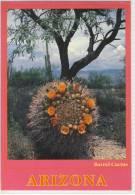 BARREL CACTUS IN BLOOM ARIZONA  Used Nice Stamp  Cactus Cactaceae Kakteen - Cactusses