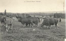 Haute Vienne - Types Limousins - Troupeau De Vaches Dans Les Prés - Pâturage - Ohne Zuordnung