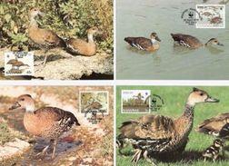 Bahamas, WWF, Birds, 1988, 4 Maximum Cards - Maximumkaarten