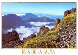 Espagne - Canaries - La Palma - Caldera De Taburiente - Vista Desde Los Andenes - Santos Cabrera Nº 306 - Neuve - 1607 - La Palma