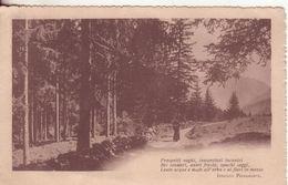 21-P.M.1^ Guerra-Cart Tema Paesaggi-bollo Posta Militare 10 Divisione-1916 X Lucca-Toscana-Poesia I.Pindemonte - War 1914-18