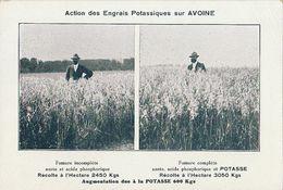 Agriculture Engrais Potasse Soude Potassiques Avoine Cereale - Paysans