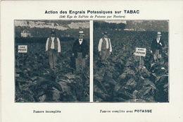 Agriculture Engrais Potasse Soude Potassiques Tabac - Campesinos