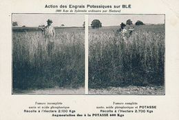 Agriculture Engrais Potasse Soude Potassiques Blé Cereale - Campesinos