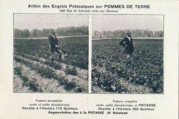 Agriculture Engrais Potasse Soude Potassiques Pomme De Terre - Campesinos