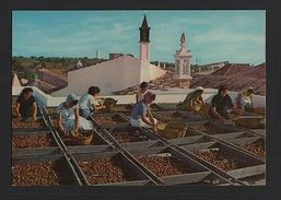 ALGARVE  1960 Years POSTCARD PORTUGAL Dying The Fig Figs Fruits Woman Labor Z1 - Postcards