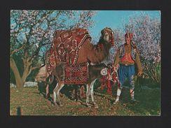 TURKEY Postcard 1960 Years  ALANYA Men Ethnic Dress & Camel Camels Donkey Z1 - Postcards