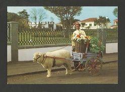 AZORES AÇORES S. MIGUEL  ST. MICHAEL SHEEP CART 1960ys Postcard PORTUGAL  Z1 - Postcards