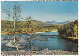 Nature - Birch Trees At A Lake - (1966)  - (Suomi/Finland) - Finland