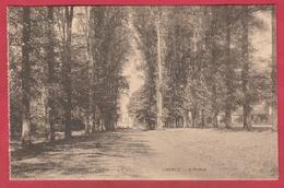 Chercq - L'Avenue ( Voir Verso ) - Tournai