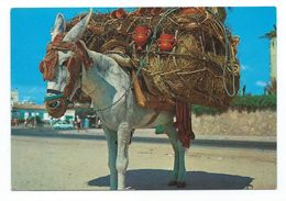 Montura Del Botijero Andaluz - Donkeys