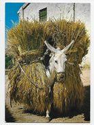 Borrico Cagada De Trigo - Donkeys