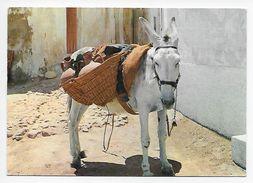 Tipico Burrito Espagnol - Donkeys