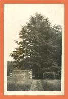 A690 / 485 27 - HARCOURT Chateau Un Cedre - Harcourt