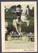 Ecole Andalouse D'Art Equestre - CPM - Photo Serge Farissier (cheval Et Cavalier) - Cavalli