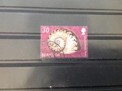 Bermuda - Schelpen (30) 2003 - Bermuda