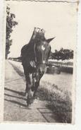 Cheval De Halage - Photo Format 6.5 X 10.5 Cm - Lieux