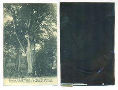 """08 Sauville CPA Et Son Négatif Original """" Le Chene Des Partisans """"archives éditeur Delboy - LJCPN 2 - Autres Communes"""