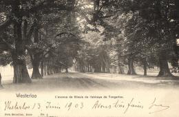 BELGIQUE - ANVERS - WESTERLOO - WESTERLO - L'avenue Des Tilleuls De L'abbaye De Tongerloo. - Westerlo