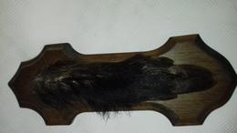 PIED D HONNEUR DE SANGLIER - Decorative Weapons