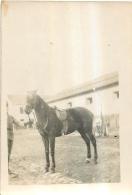PHOTO  SCENE DE CASERNE  CHEVAL  FORMAT  8.50 X 6 CM - Guerre, Militaire
