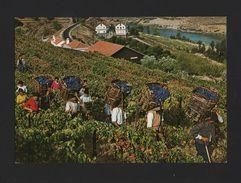 PC 1960s PORTUGAL DOURO WORLD HERITAGE PORT WINE Wines Vins Vinos Agriculture - Postcards