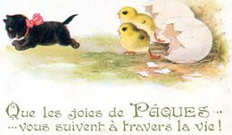 CHAT(PAQUES) - Chats