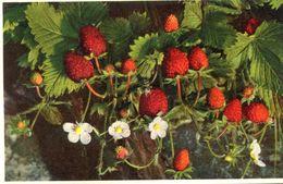 FRAISE - Flowers, Plants & Trees