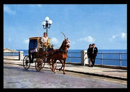 [015] Pferde-Karte 130, Pferdekutsche, Malta, ~1980 - Pferde