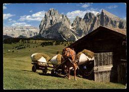 [015] Pferde-Karte 131, Leiterwagen, Seiseralm, Dolomiten, Südtirol, ~1980 - Pferde