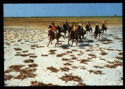 [015] Pferde-Karte 138, Reiter Im Seewinkel, Burgenland, ~1970 - Pferde