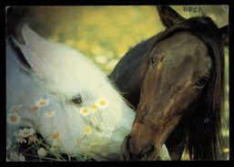 [015] Pferde-Karte 139, Aus 'Mein Pferdetraum' Von Robert Vavra, ~1990 - Pferde