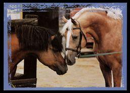[015] Pferde-Karte 142, 2 Pferde, Gel. 2002 - Pferde