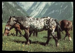 [015] Pferde-Karte 143, Noriker, ~1980, Wendy-Pferderassen - Pferde