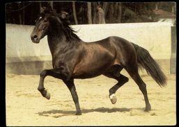 [015] Pferde-Karte 149, Lusitano, Portugal, ~1980, Wendy-Pferderassen - Pferde