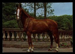 [015] Pferde-Karte 154, ~1980 - Pferde