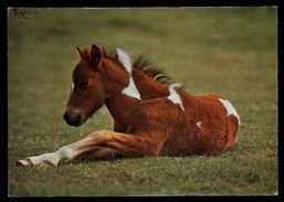 [015] Pferde-Karte 155, Fohlen, ~1980 - Pferde