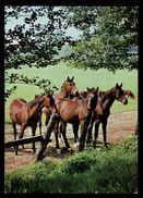 [015] Pferde-Karte 160, Pferdegruppe, ~1980 - Pferde