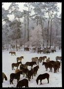 [015] Pferde-Karte 162, Dülmener Wildpferde, ~1980 - Pferde